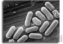 Physiological effects of reduced gravity on bacteria