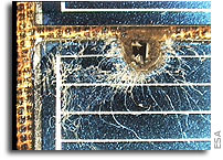 Space debris: assessing the risk