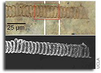 Scientists Analyze 650-Million-Year-Old Fossils in 3D � a First, With Implications for Finding Life on Mars