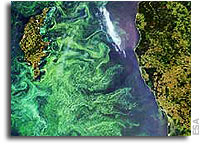 Harmful Algal Blooms monitored from space in Chile