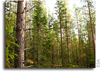ESA leads the way to map boreal forest