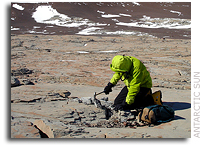 Life retreated to Antarctica during mass extinction