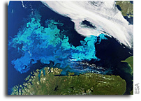 Photo: Algal Bloom In The Barents Sea As Seen From Space