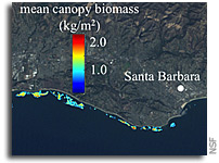 New View of Undersea Giant Kelp Forest