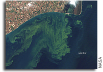 Photo: Toxic Algae Bloom in Lake Erie As Seen From Space