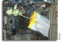 Astronaut Don Pettit's Diary of a Space Zucchini