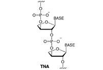 Did an Earlier Genetic Molecule Predate DNA and RNA?