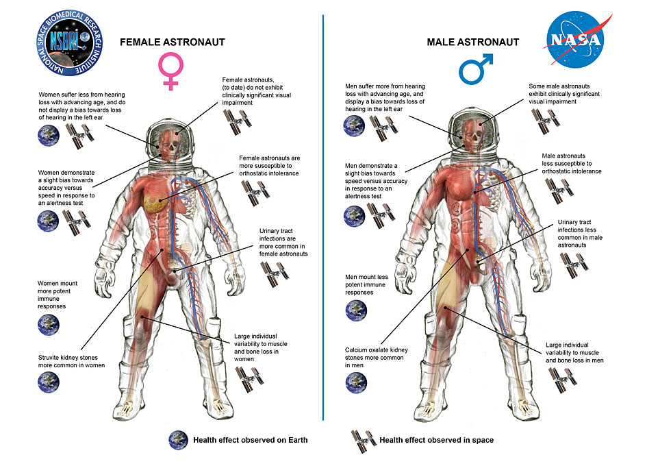 Study Investigates How Men And Women Adapt Differently To
