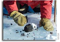 NASA Renews Search for Antarctic Meteorites