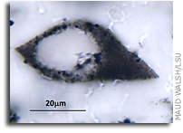Ancient Plankton-like Microfossils Span Two Continents
