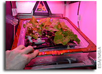 Salads Growing In Space