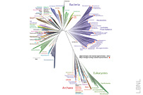 Unsuspected New Microbes Expand The Tree of Life