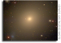Radial Acceleration Relation Holds in All Common Types of Galaxies