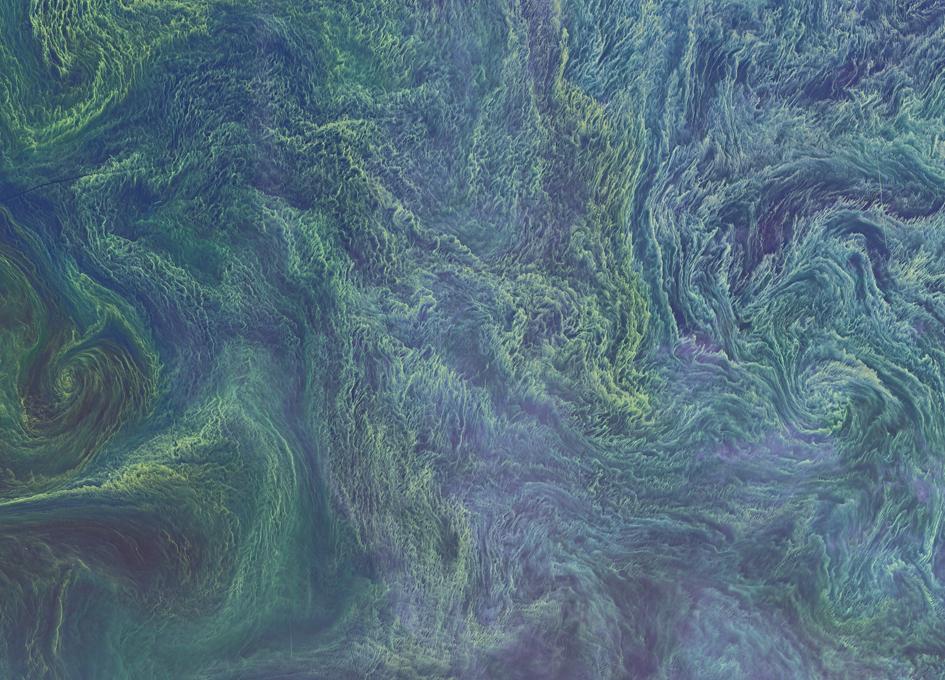 Baltic Sea Blooms As Seen From Orbit