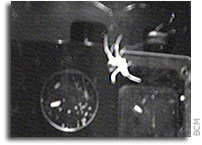 Video: International Space Station: Spiders in Space